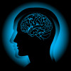 Golf and Your Brain: Achieving Your Perfect Golf Swing Through Neurology